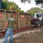 SA rhinos emigrate to Florida
