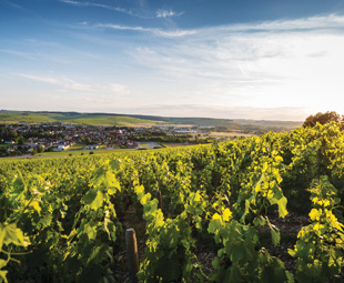 DAY ONE: CHABLIS, FRANCE